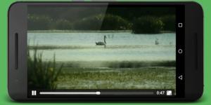 torrent video stream(1)